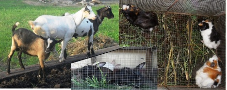 Goats and two types of rabbits (Photo: Lar São Jerónimo)